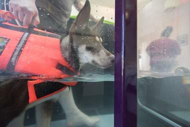 Caboodle, a special needs puppy getting water therapy