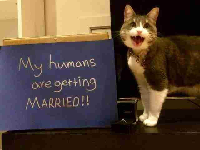 cat helps announce her parents engagement