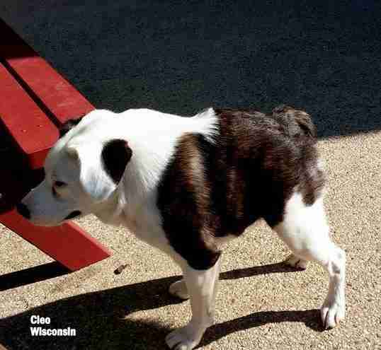 No This Wasnt Photoshopped Its What Happens When Idiots Breed - Guy uses photoshop to turn his miniature dog into a giant