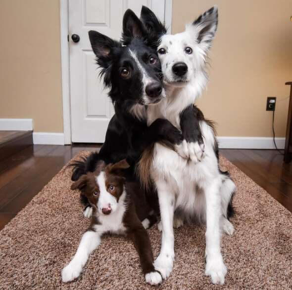 hugging dogs get a new brother