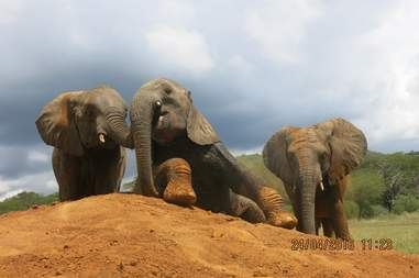 Young elephants at DSWT rehabilitation center