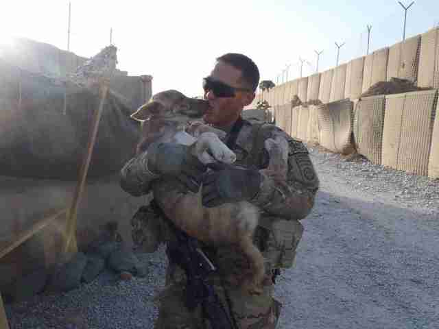Good Soldier Army Adorable Dog - tmg-article_tall;jpeg_quality\u003d20  Perfect Image Reference_294610  .jpg