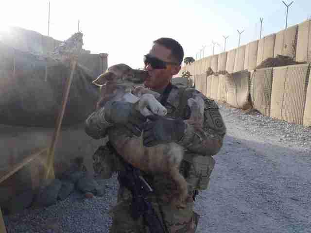 Beautiful Afghanistan Army Adorable Dog - tmg-article_tall;jpeg_quality\u003d20  Graphic_662325  .jpg