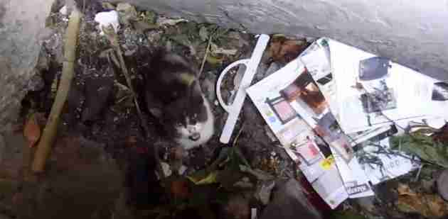 Trapped And Starving Kitten Refuses To Stop Crying For Help