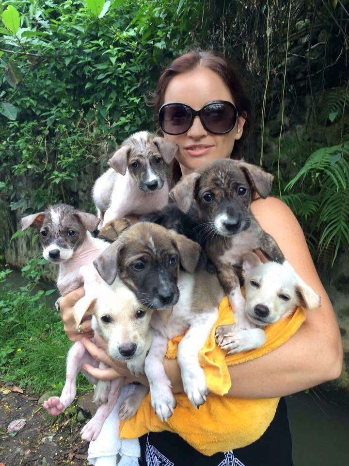 Balinese puppies being cared for at BARC