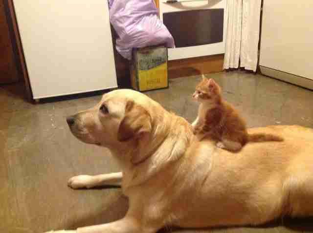 Image result for dog love cat