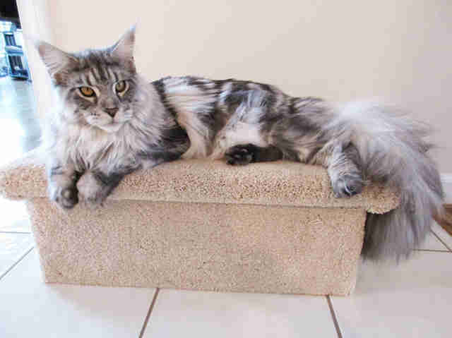 pet steps from cozycatfurniture.com