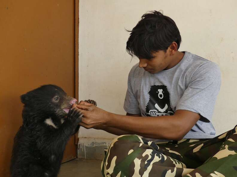 A baby sloth bear at a rescue facility in India