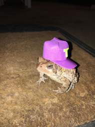 toad wears hats