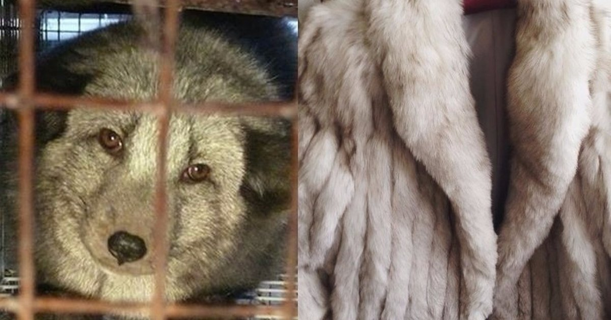 2550d7e16ed How To Tell If Your  Faux  Fur Is Actually Real - The Dodo