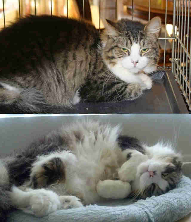 Before And After Photos Show What Love Does To Cats The Dodo - 27 amazing transformations of dogs and cats before after adoption