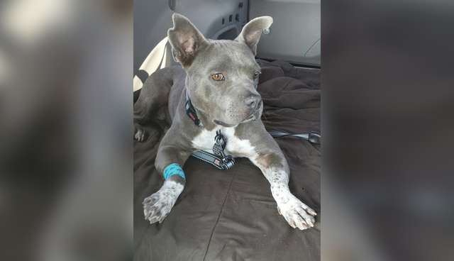 Don't Give Up Hope If Your Dog Has Cancer  Here's Why  - The