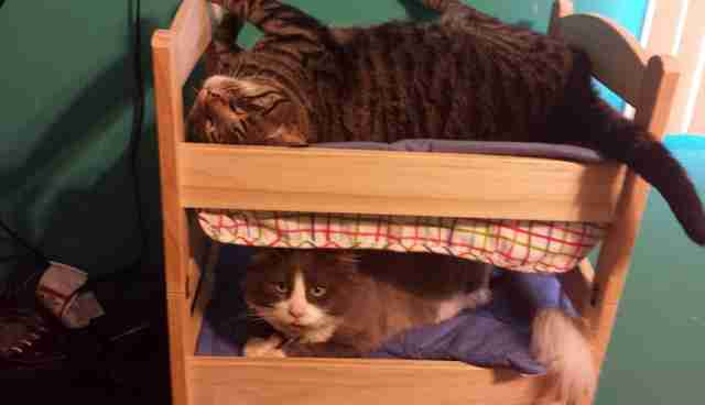19 Cats Who Understand Doll Beds Were Invented Just For