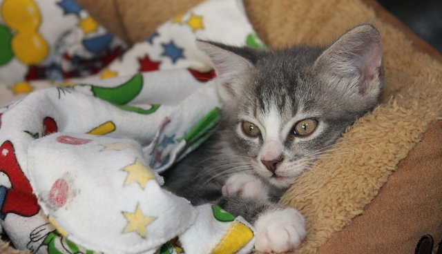 5 Illnesses That Cat Parents Should Watch Out For - The Dodo