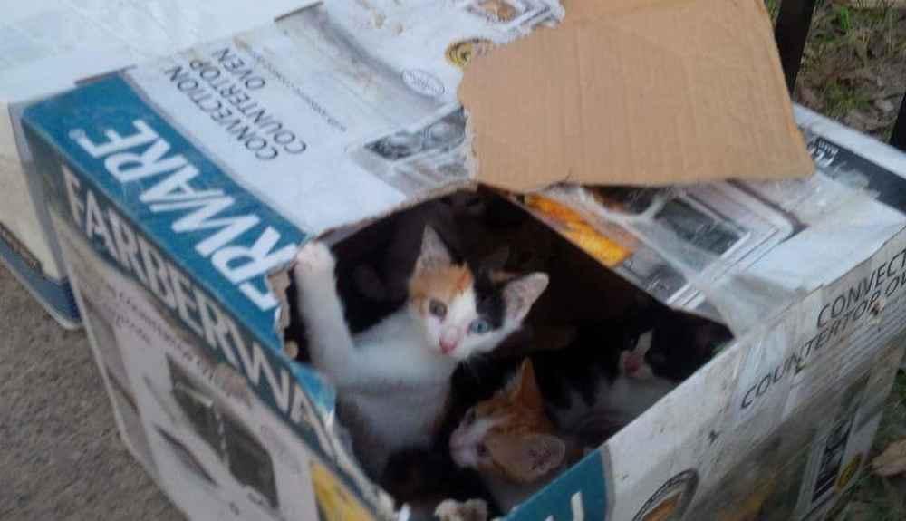 train cat litter outside box