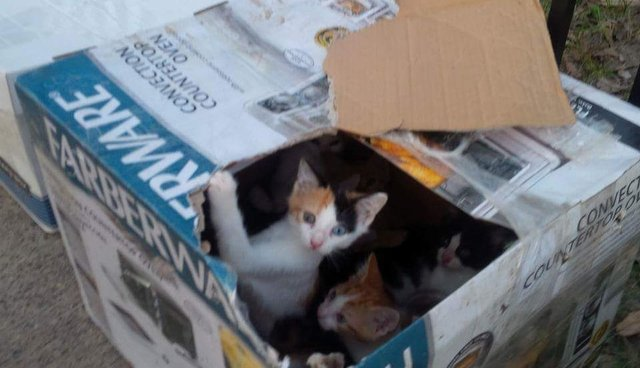 Here's What To Do If You Find A Litter Of Kittens - The Dodo