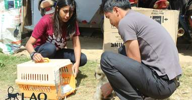 Orphaned gibbon seized in Laos with rescuers