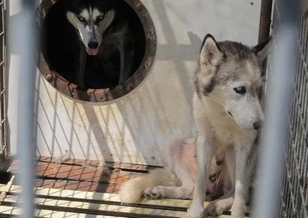 Huge Pet Store Chain Selling Puppies From Worst Conditions