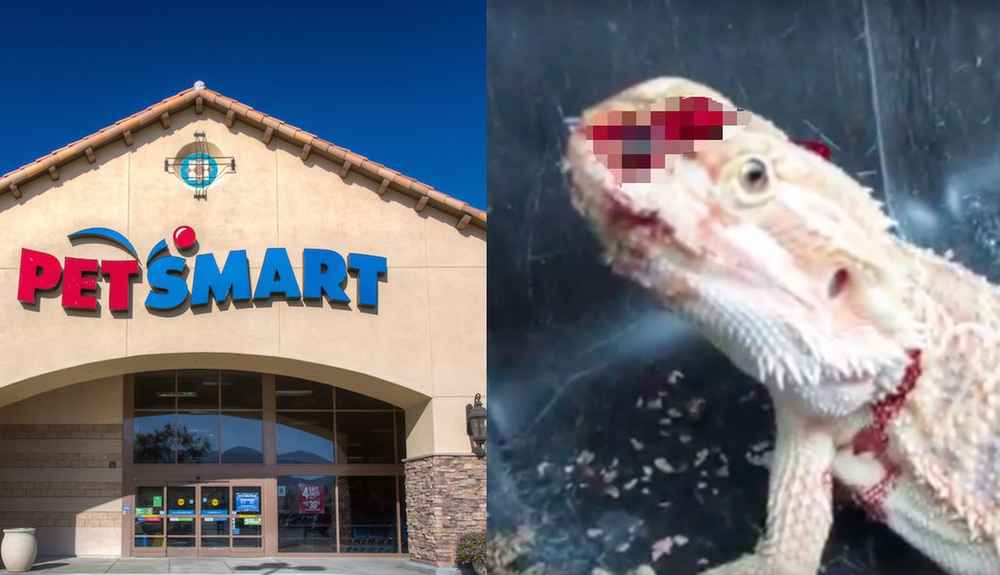 This Is Where PetSmart Gets Its Animals, And It's Not Pretty