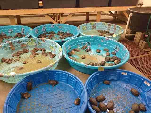 This Is Where PetSmart Gets Its Animals, And It's Not Pretty - The ...
