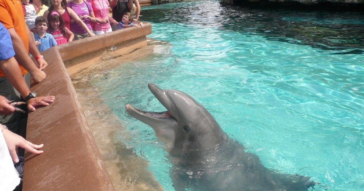 Incidents At Seaworld Parks: Dolphin Bites Child's Hand At SeaWorld, Sparks Federal