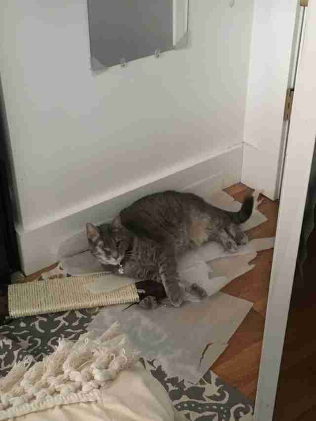 senior cat rescued from hoarders