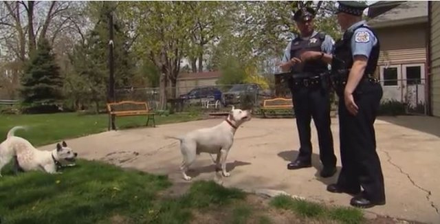 Why Are So Many Dogs Dying In Police Shootings? - The Dodo