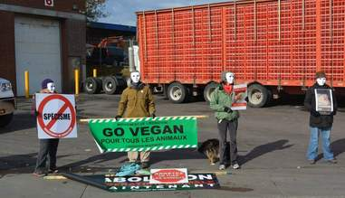 Standing in Solidarity Against Speciesism