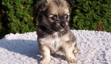 7 Reasons Not To Buy A Puppy From A Pet Store The Dodo