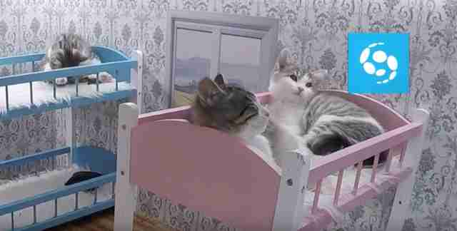 reality show starring kittens