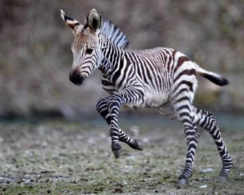 20 Animals You Never See As Babies - The Dodo