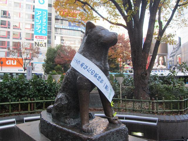 Bức ảnh hiếm hoi của Hachiko: Chú chó trung thành nhất thế giới