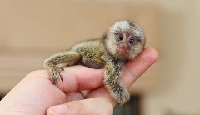 Teeny-Tiny Animals You Can't Believe Are Even Real