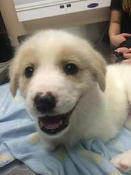 Puppy with two legs