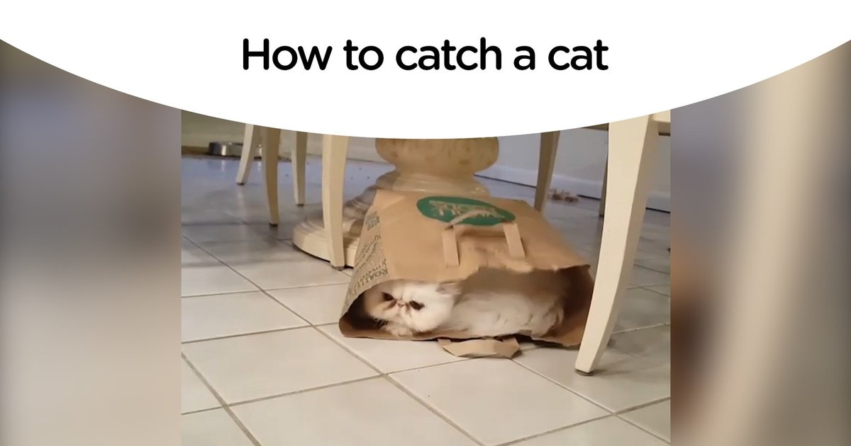 littermaid cat litter box reviews