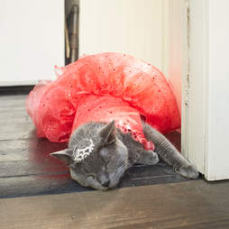 cat quincenera