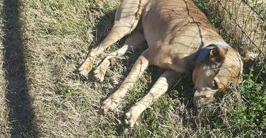 Dumped dog in Echo Lake Park, Fort Worth, Texas