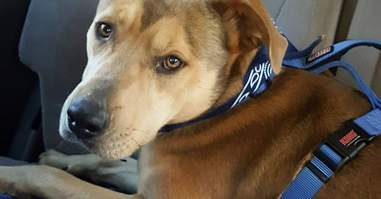 Dog rescued from dumping ground