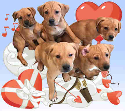 shelter sends puppygrams