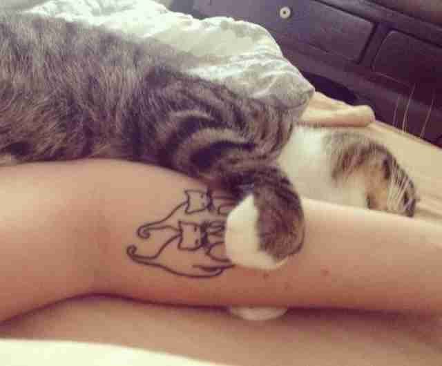 14 tattoos that perfectly capture cattitude the dodo for Cat asshole tattoo