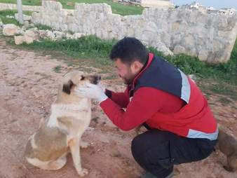 'Cat man' of Aleppo saving abandoned mother dog