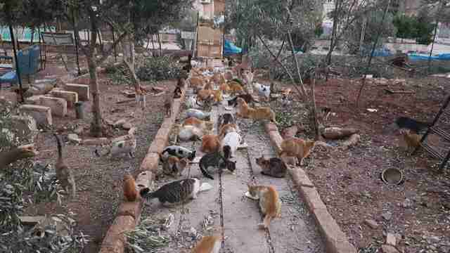 'Cat man' of Aleppo's old sanctuary in East Aleppo