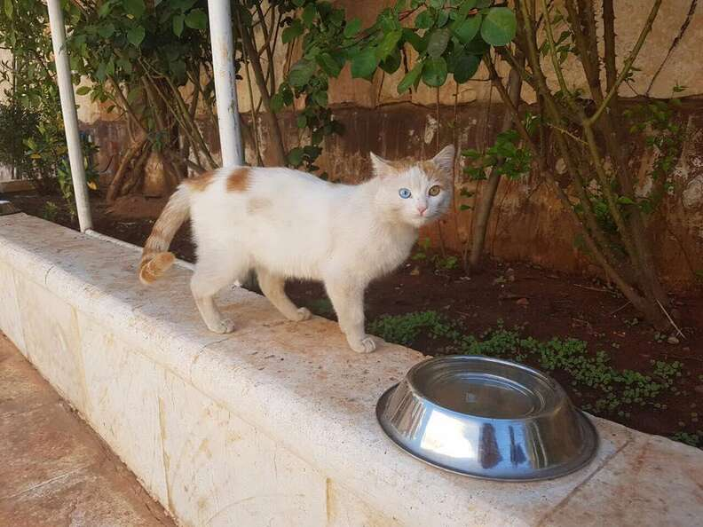 Stray cat at the 'cat man' of Aleppo's new sanctuary in Syria
