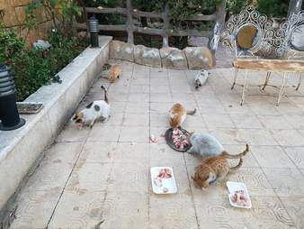 Rescued stray cats at the new House of Cats Ernesto sanctuary in Syria