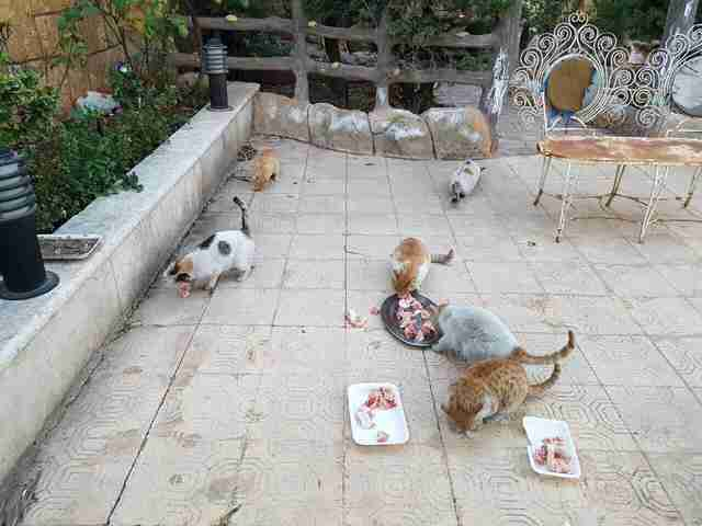 Cats at the new sanctuary