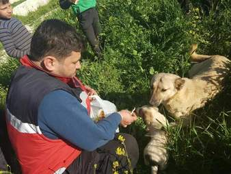 'Cat man' of Aleppo saving abandoned dog and her puppies