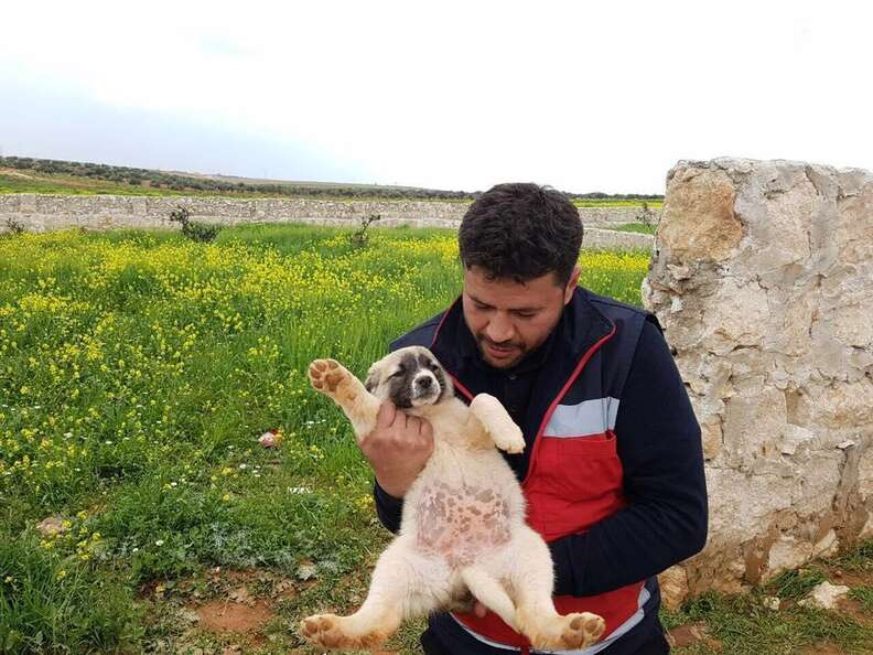 'Cat man' of Aleppo holding abandoned puppy
