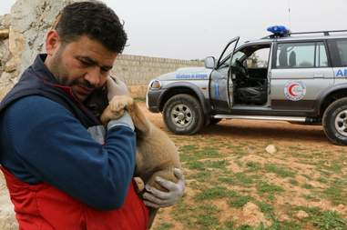 'Cat man' of Aleppo holding puppy he's saving