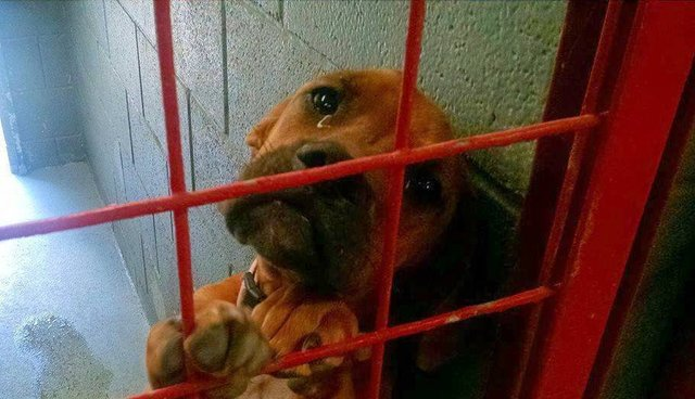 Abandoned Shelter Dog Photographed With Tears In Her Eyes