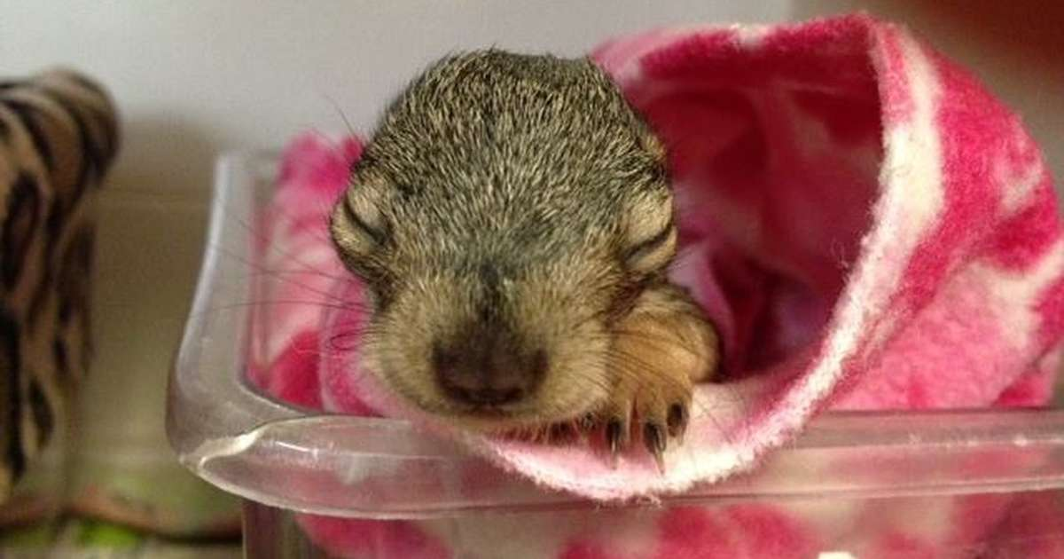 What To Do If You Find A Baby Squirrel On The Ground The Dodo
